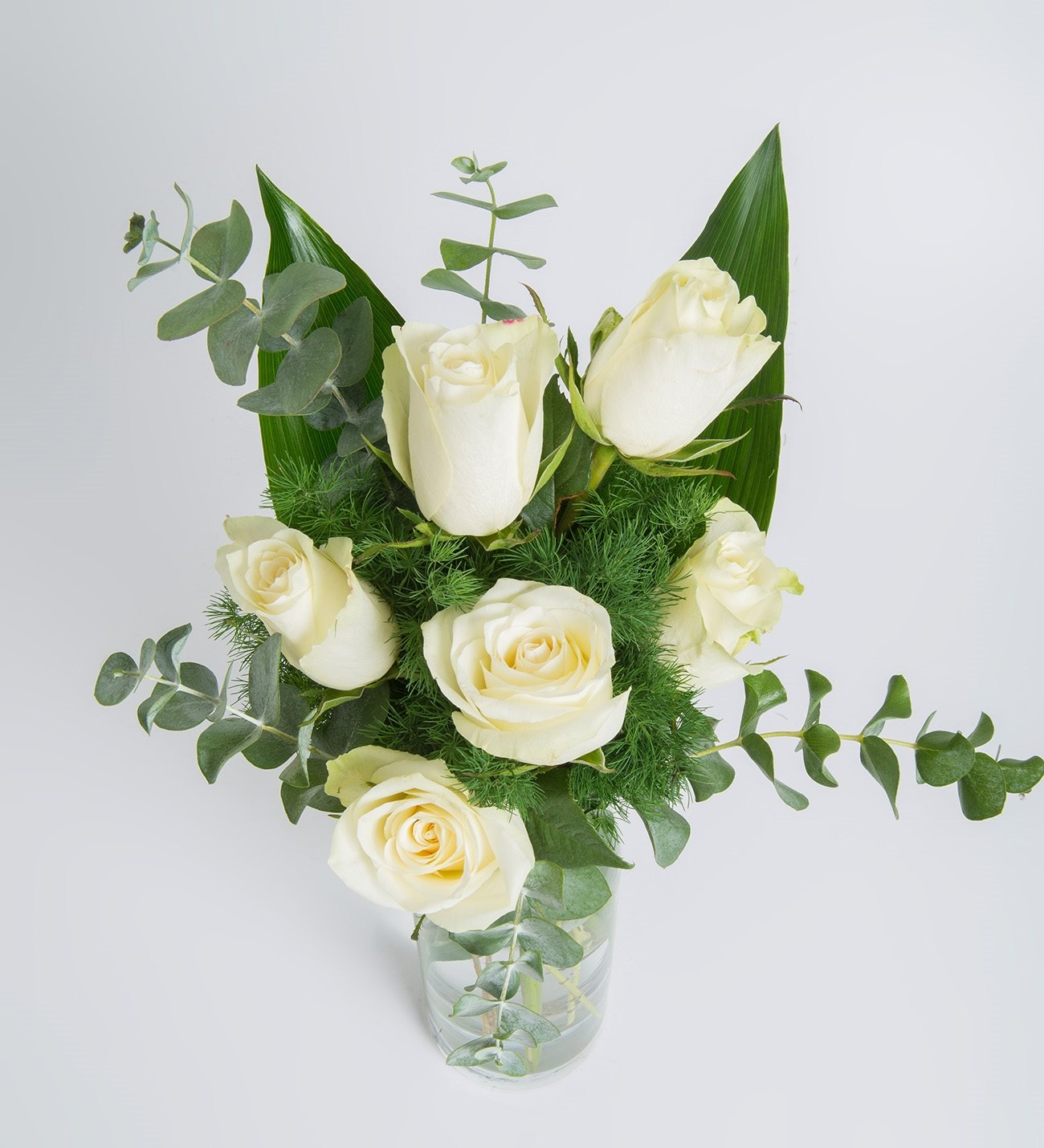as a Dove - 6 White Roses