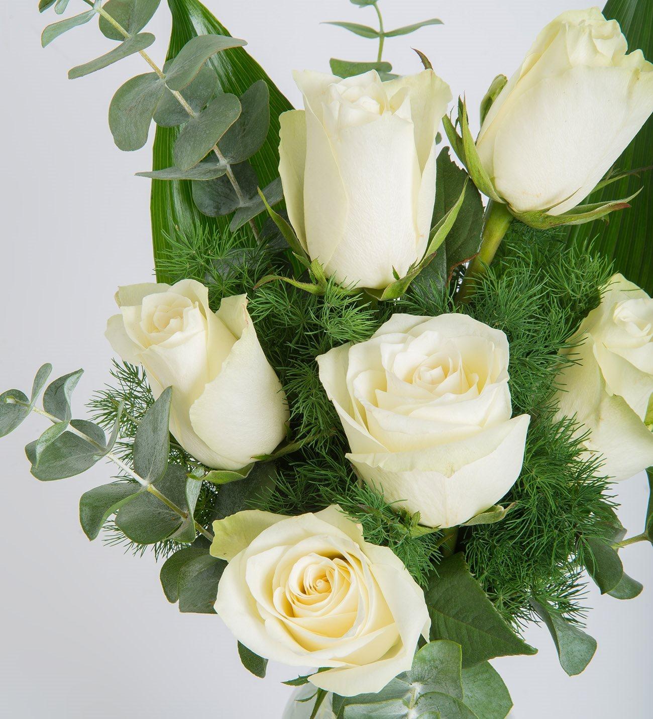 White As A Dove 6 White Roses