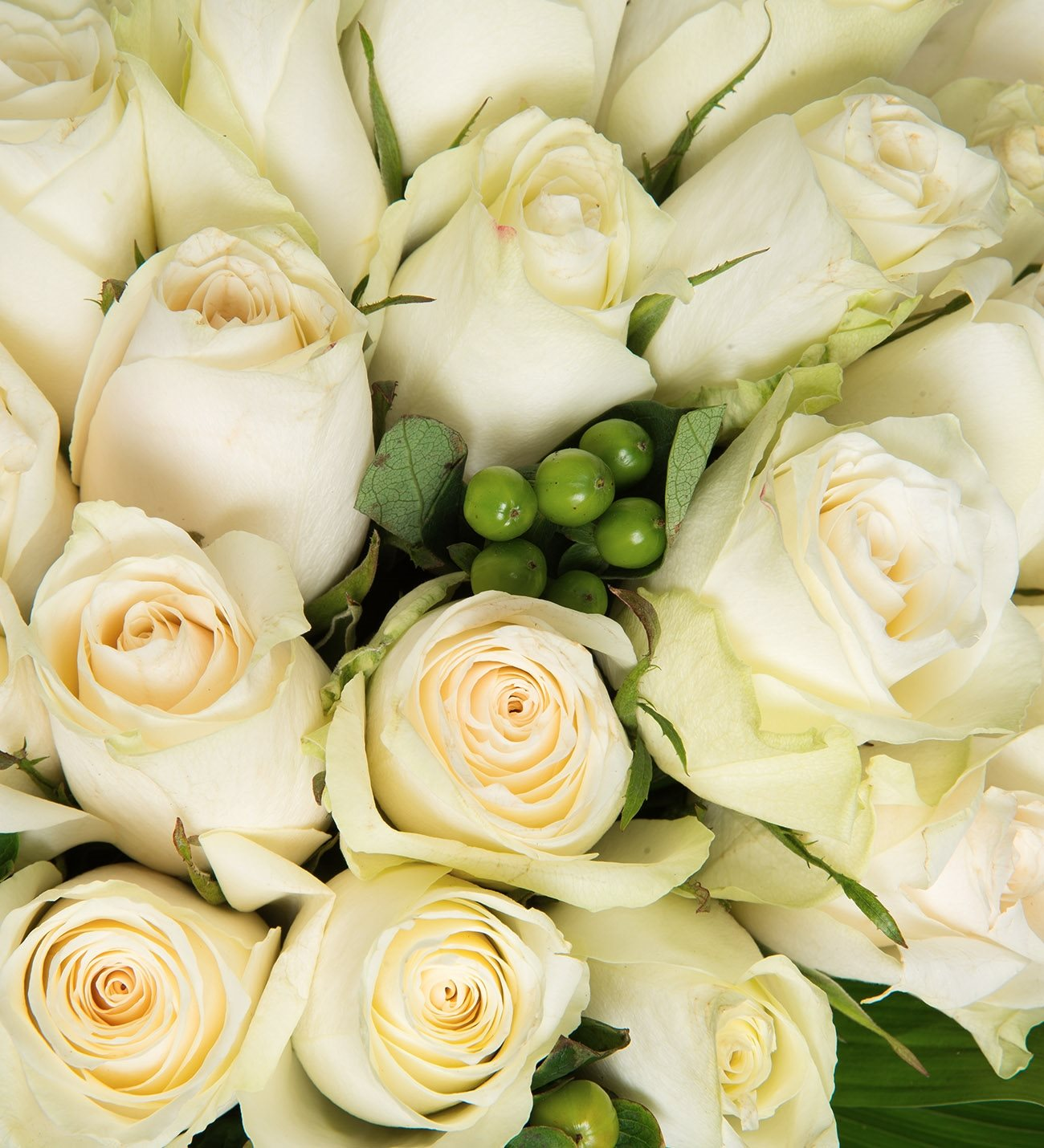 Get 50 white roses for same day delivery lolaflora 50 white roses izmirmasajfo