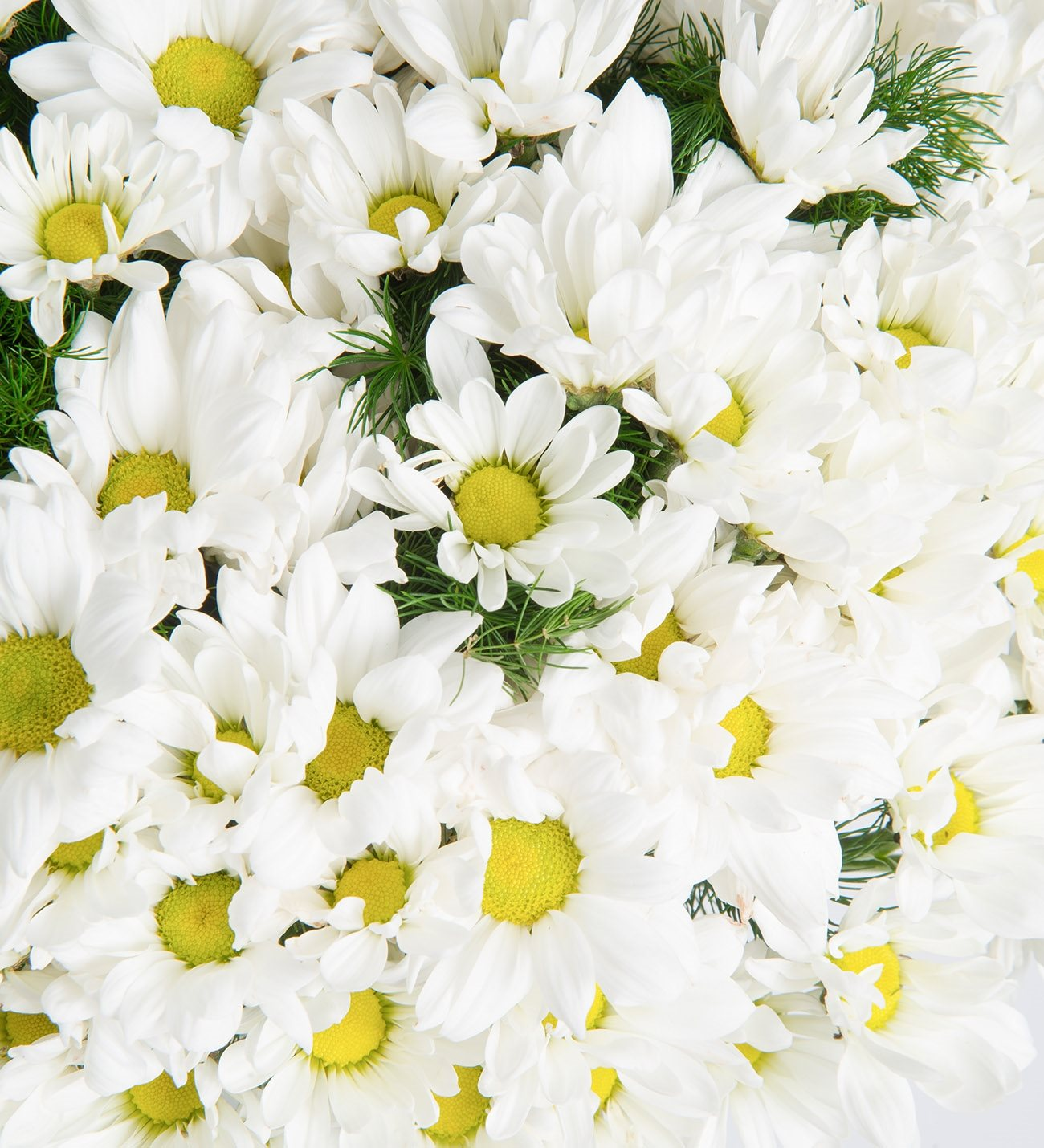 large bunch of white daisies with free same day delivery