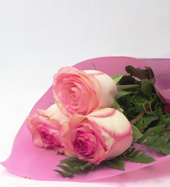 roses esperance tri