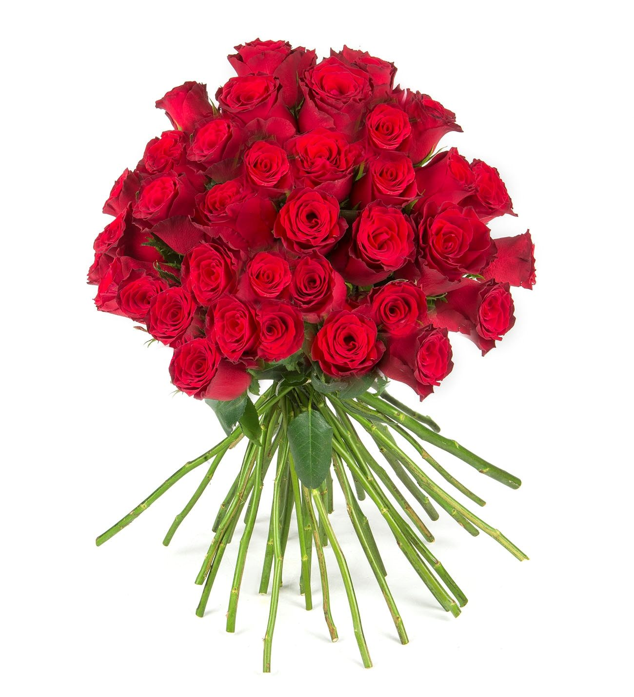 50 Red Roses - Kiss of Love