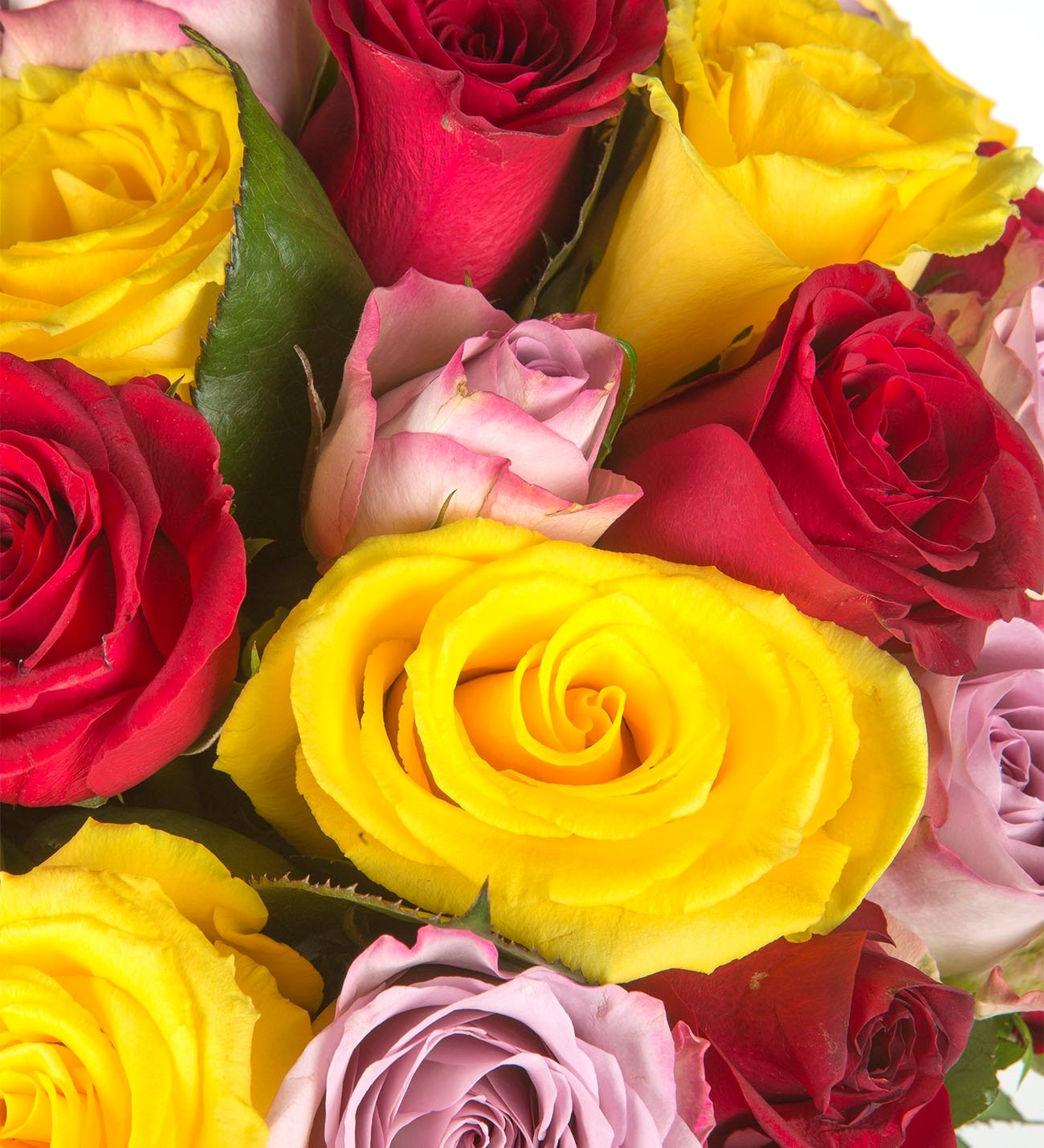 Colorful roses recolor your day 30 roses of lilac red and yellow colors dhlflorist Image collections